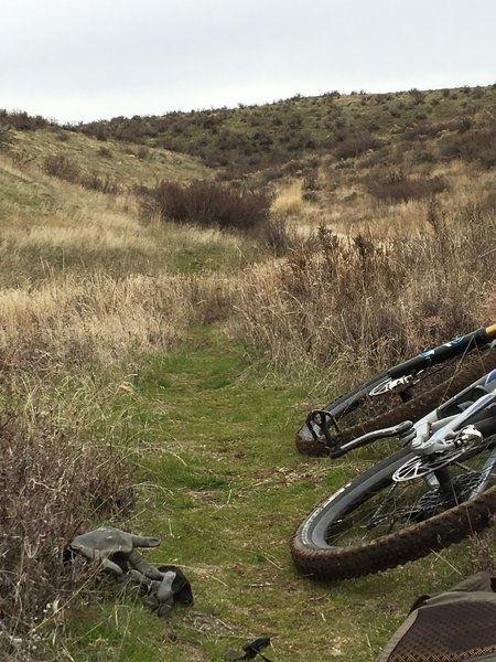Rowdy sections and mellow sections on Frisky Donkey
