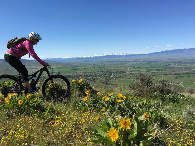 May is not to be missed when the flowers are popping.  Mt Stuart range and the Kittitas Valley looking WNW in the background.