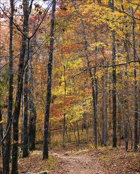 The trail under a canopy of fall foliage.