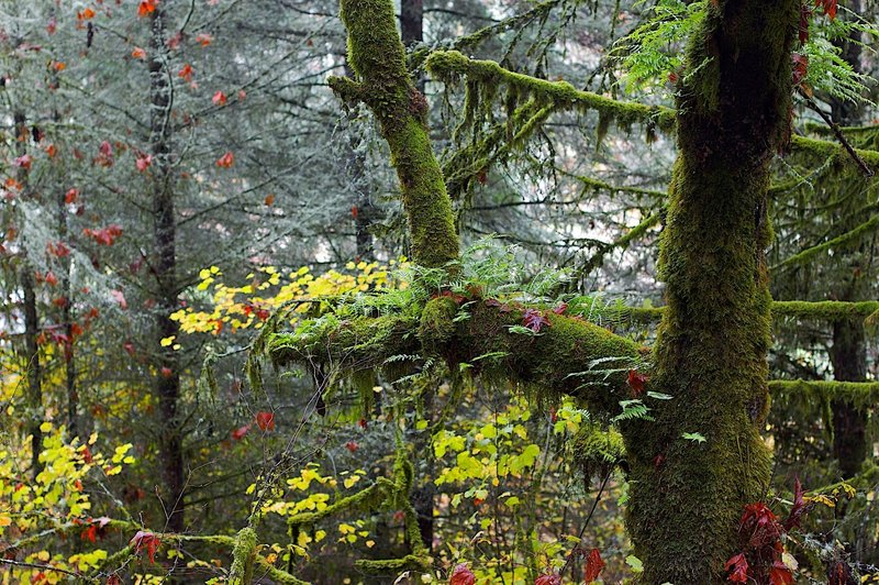 Ferns Growing on Limbs
