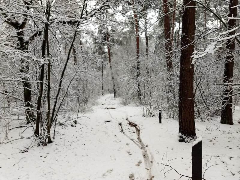 Forest path in the winter.