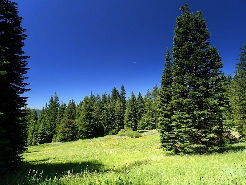 A nice meadow.