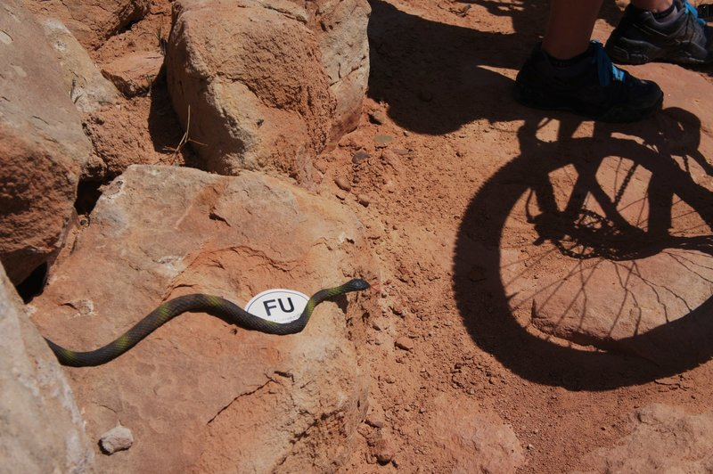 "Back in 2012 we were surprised by a fake snake on the trail. A gratuitous ""Fruita USA"" sticker was left as a ""thank you."" Other people have mentioned this tradition on Vernal trails.  Beware!"