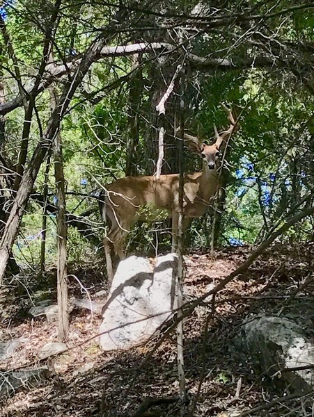 The bucks like these woody hollow areas near the lake.