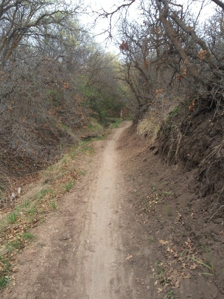 Singletrack in canyon hollow.