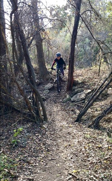 The singletrack that follow along Hamilton Greenbelt trail is great for young riders to practice skills.