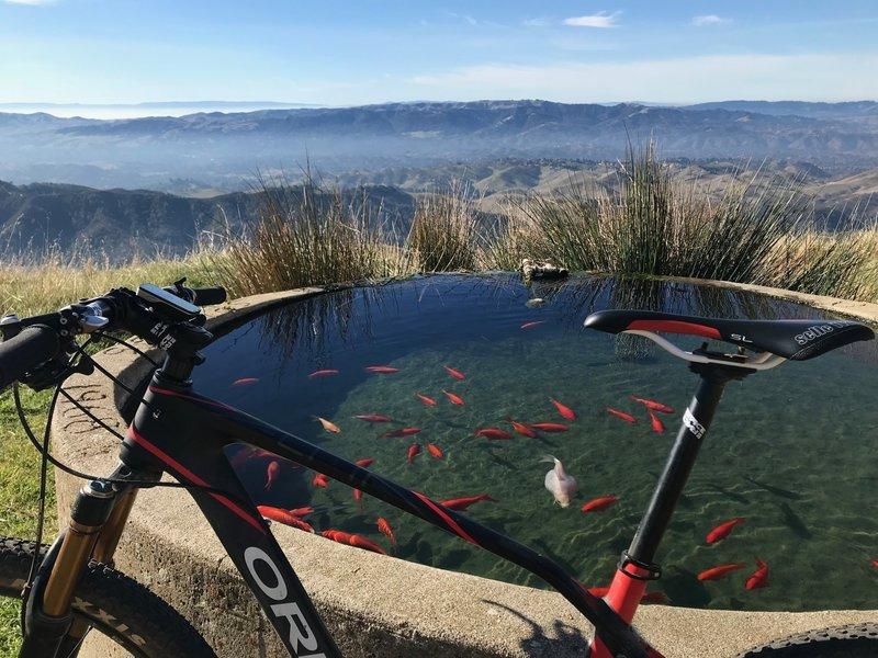 Enjoy this spring fed goldfish pond halfway up mountain!