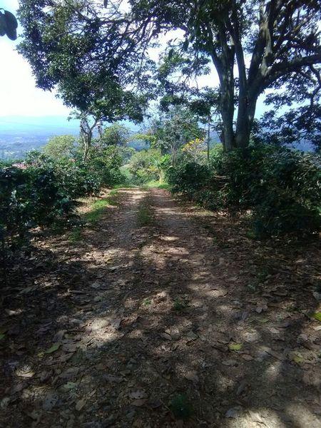 Beautiful coffe plantations
