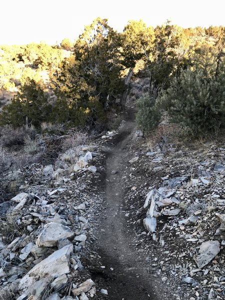 Singletrack through the pinyons