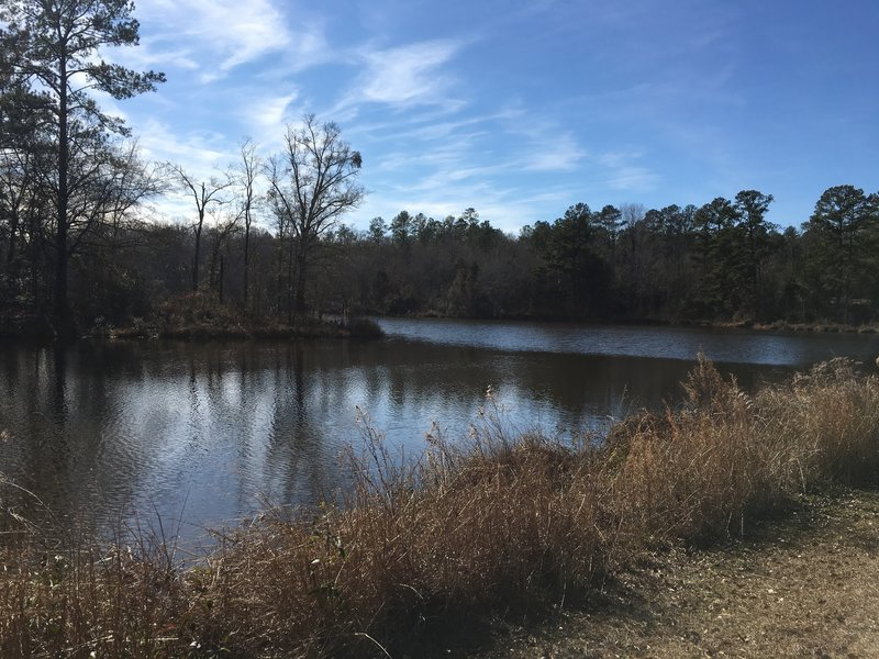 The pond at Selma is open for fishing year around.  But watch out for the alligators that call it home.