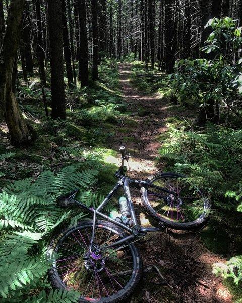 Kennison MTN Trail.