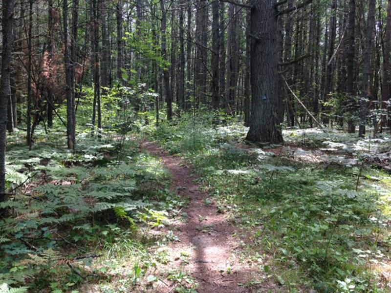 A nice trip through the pines.