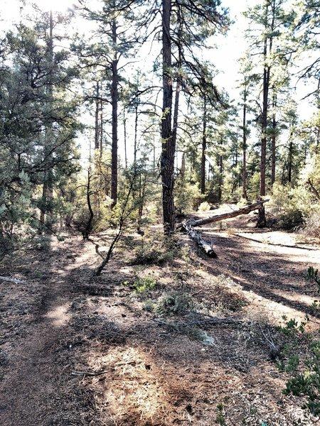 BLM Trail.