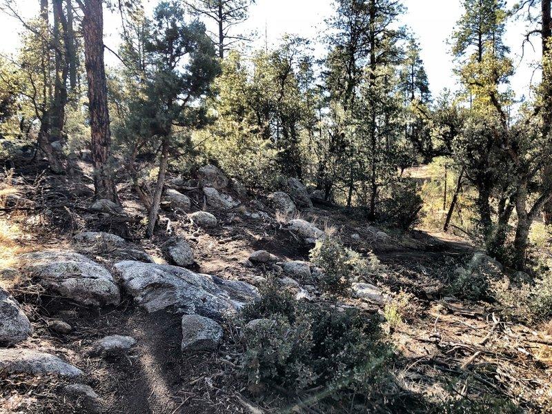 BLM Trail - A few rocks.