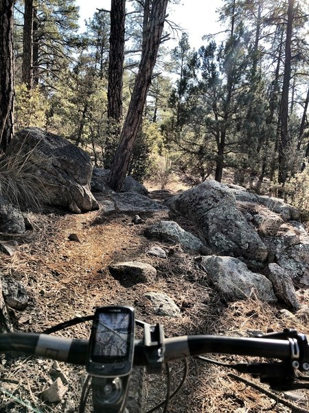 BLM Trail - a few more obstacles.