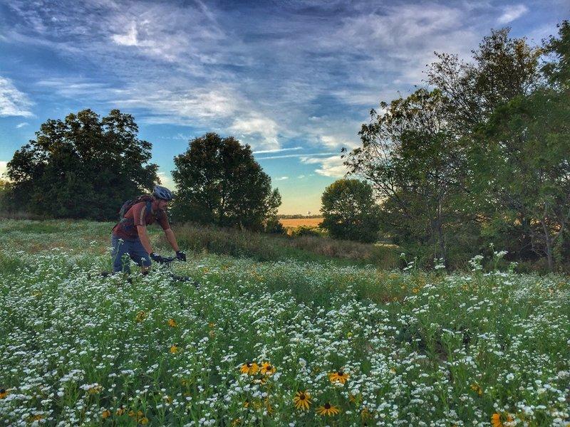 View of Marion, Iowa in the background while local rider enjoys the flow through prairie pollinator habitat.