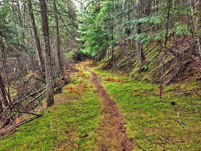 Heading through the vibrant green moss on Big Eddy.