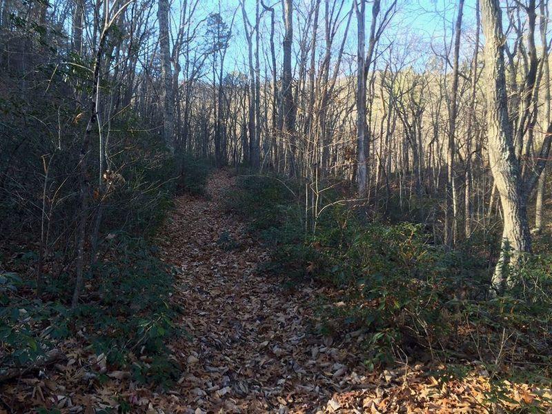 Along the Lee Creek Trail.