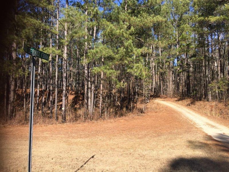 Forest Service Road F3006 provides an optional gravel grinder excursion