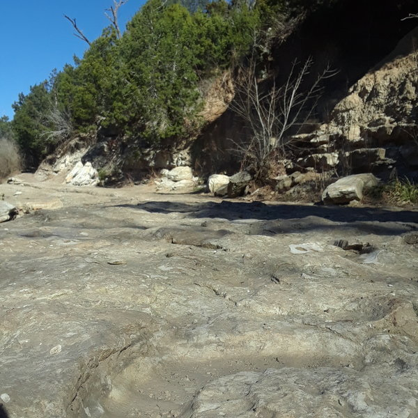 In the forground is an Ammonite fossil some 60-100 million years old embedded in the creek bank that is also part of the Gnar-Wall Trail as the trail drops down out of the woods in the background.