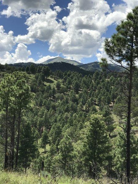 Great views of Sierra Blanca!