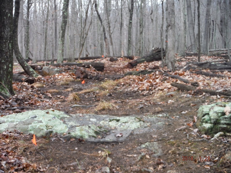 Logs cut, trail marked and cleared!