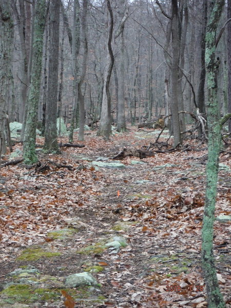 Part of the Easy-Up trail.
