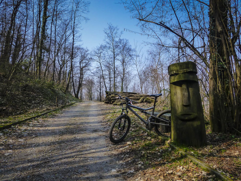 A tyipcal welcoming forest road section in the Parco della Collina del Penz