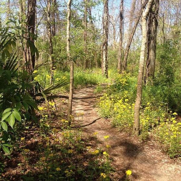 The trail in mid spring.