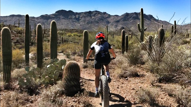 Riding among the saguaros.