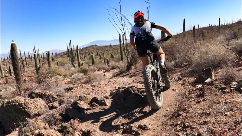 More beautiful singletrack in Tucson AZ.