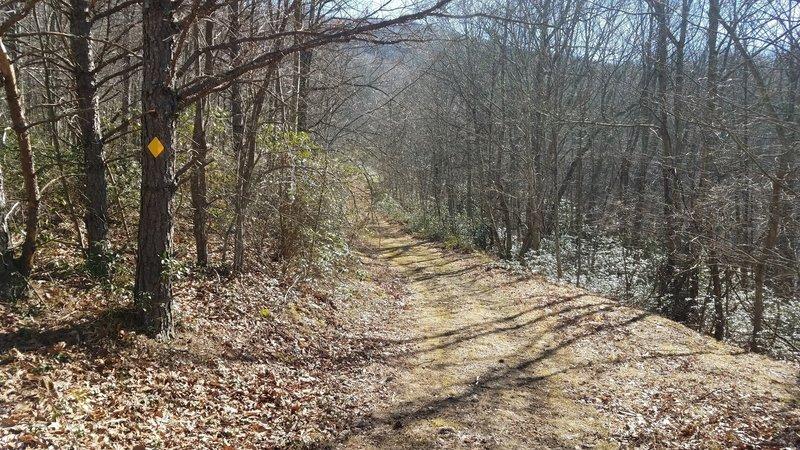old log road section