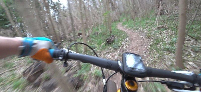 Rabbit Run through the trees