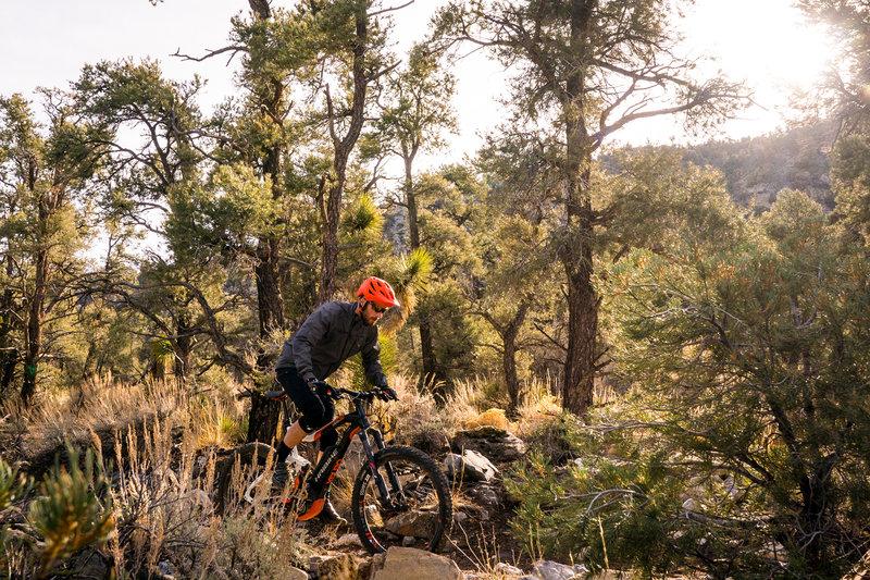 Pedaling through pines along the Vista Trail.