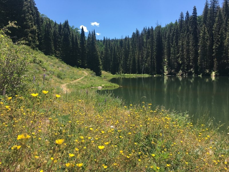 Wildflowers bloom in abundance at Clark Lake.