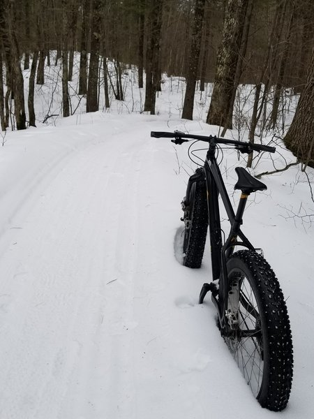 Trails are well groomed for fatbikes.