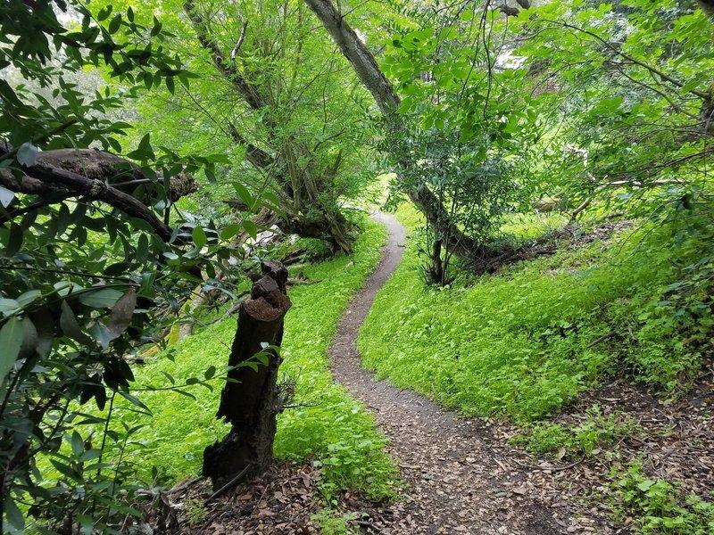 Crockett Hills Trail - Might be Tree Frog Loop