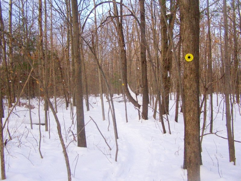 Along the yellow-blazed Perimeter trail at Thatcher Park.