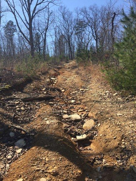 Steep logging road climb