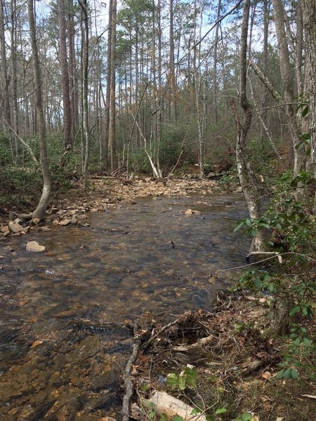 Remote section of Stamp Creek just off trail.
