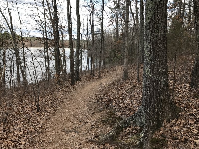 The Lake Trail traverses pleasant forests along a smooth tread.