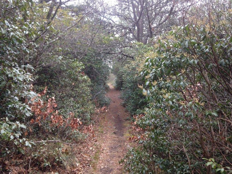 Narrow Singletrack straight through the foliage