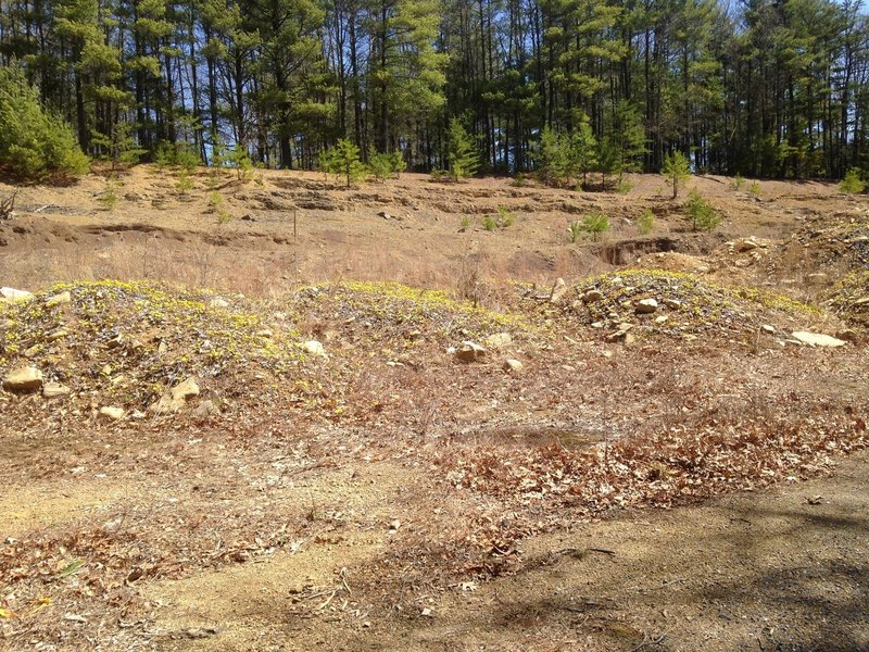 Nature Reclaiming an Excavated Area along the Climb to Narrowback Mountain