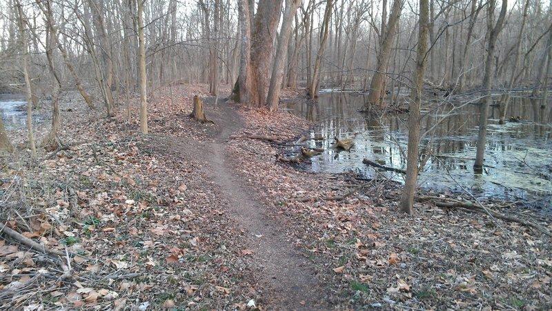 Singletrack through the wetlands