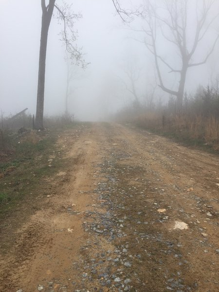 Foggy morning on Grassy Hollow Road