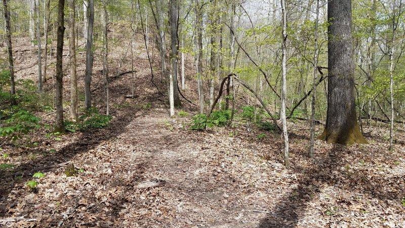 Junction of Deer Run and South Ridge.