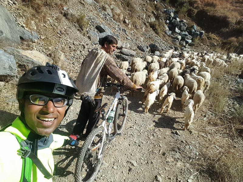 Himalayan Mountain goats