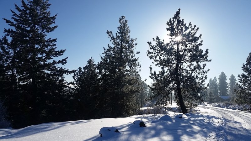 Rimrock Drive/Trail in Palisades Park becomes a snowy wonderland come winter.