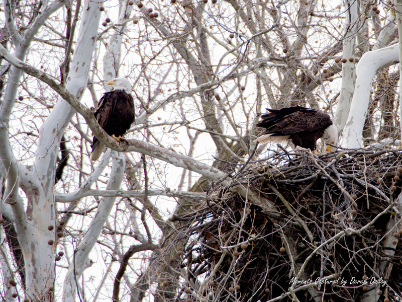 Look across the river for an epic view of an active eagle's nest.