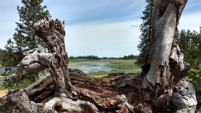 Slavin Ranch wetlands